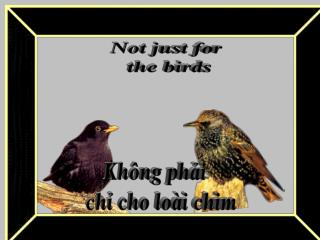 Không phải  chỉ cho loài chim