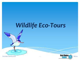 Wildlife Eco-Tours