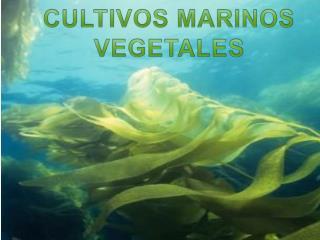 CULTIVOS MARINOS VEGETALES