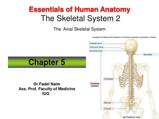 Essentials of Human Anatomy  The Skeletal System 2  The  Axial Skeletal System