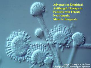 Advances in Empirical Antifungal Therapy in Patients with Febrile Neutropenia. Marc A. Boogaerts