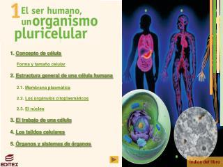 1.  Concepto de célula Forma y tamaño celular 2.  Estructura general de una célula humana