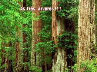 As  três   árvores ! ! !