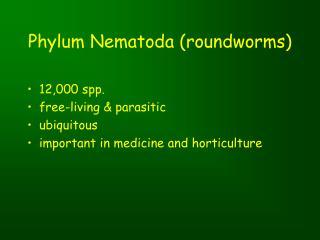 Phylum Nematoda (roundworms)