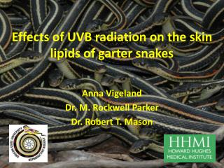 Effects of UVB radiation on the skin lipids of garter snakes
