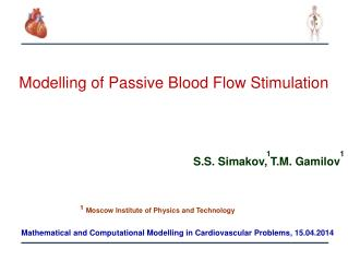 Modelling  of Passive Blood Flow Stimulation