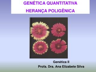 Genética II Profa. Dra. Ana Elizabete Silva