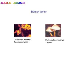Bentuk jamur