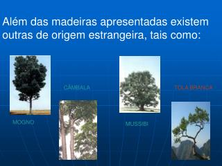 Além das madeiras apresentadas existem outras de origem estrangeira, tais como: