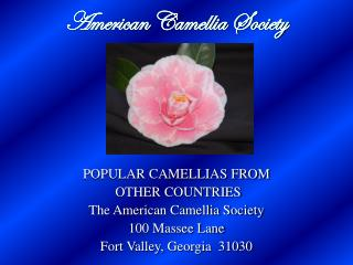 American Camellia Society