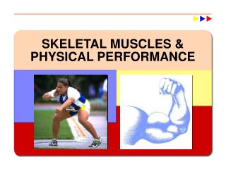 SKELETAL MUSCLES  PHYSICAL PERFORMANCE