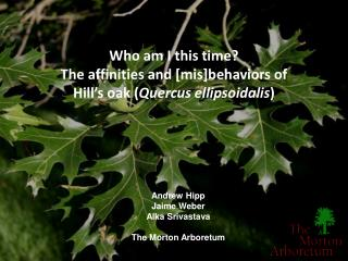 Who am I this time? The affinities and [mis]behaviors of  Hill's oak ( Quercus ellipsoidalis )