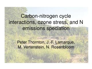 Carbon-nitrogen cycle interactions, ozone stress, and N emissions speciation