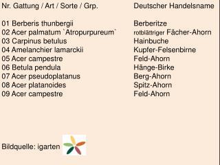 Nr. Gattung / Art / Sorte /  Grp .  Deutscher Handelsname 01  Berberis thunbergii Berberitze