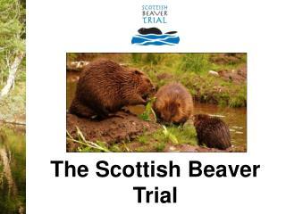The Scottish Beaver Trial