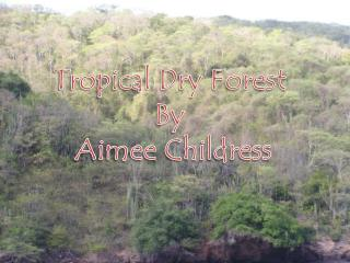Tropical Dry Forest  By  Aimee Childress