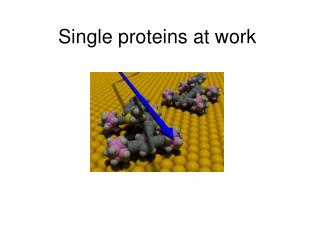 Single proteins at work