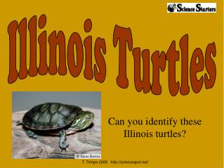 Can you identify these Illinois turtles?