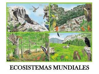 ECOSISTEMAS MUNDIALES