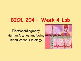 BIOL 204 – Week 4 Lab