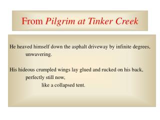 From  Pilgrim at Tinker Creek