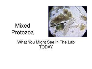 Mixed Protozoa