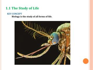 KEY CONCEPT  Biology is the study of all forms of life.