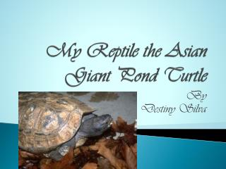 My Reptile the Asian Giant Pond Turtle