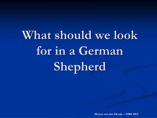 What should we look for in a German Shepherd
