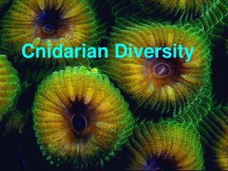 Cnidarian Diversity