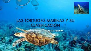 Las Tortugas Marinas y su clasificación