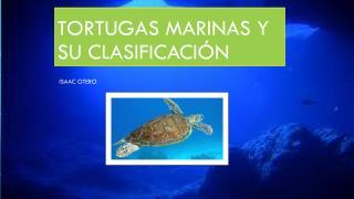 Tortugas marinas y su clasificación