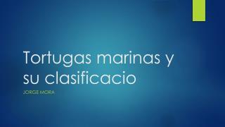 Tortugas marinas y su  clasificacio