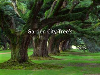 Garden City Tree's