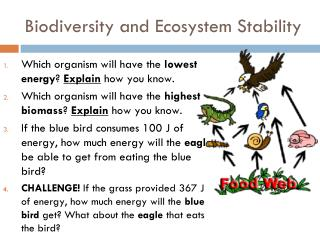 Biodiversity and Ecosystem Stability