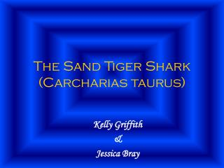 The Sand Tiger Shark Carcharias taurus