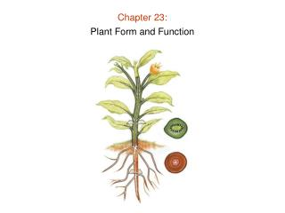 Chapter 23: Plant Form and Function