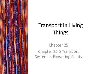Transport in Living Things