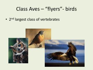 "Class Aves – ""flyers""- birds"