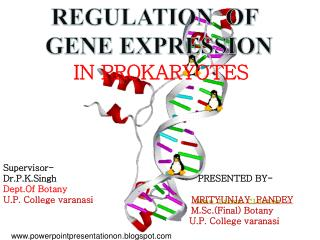 REGULATION  OF         GENE EXPRESSION                IN PROKARYOTES Supervisor-