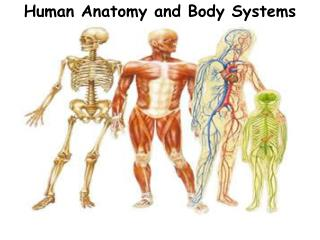Human Anatomy and Body Systems