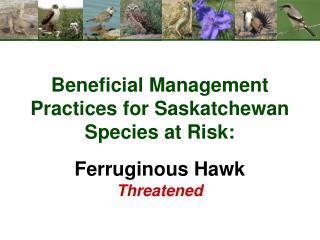 Beneficial Management Practices for Saskatchewan Species at Risk: Ferruginous Hawk Threatened