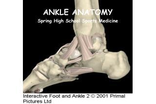 ANKLE ANATOMY Spring High School Sports Medicine