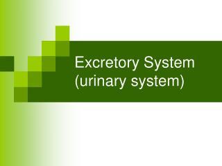 Excretory System (urinary system)
