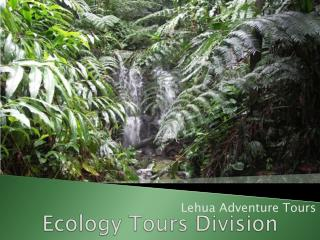 Ecology Tours Division