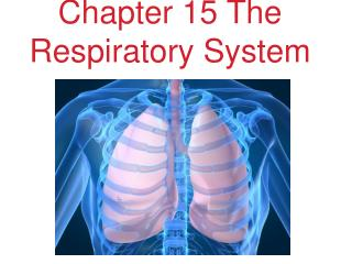 Chapter 15 The Respiratory System
