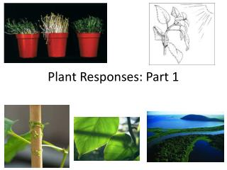 Plant Responses: Part 1