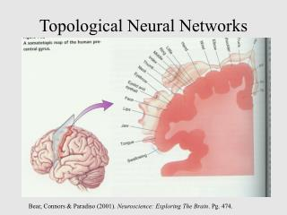 Topological Neural Networks
