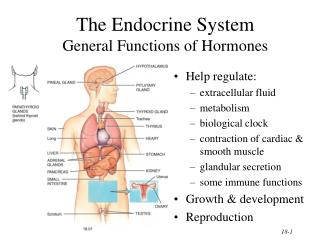 The Endocrine System  General Functions of Hormones