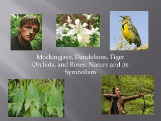 Mockingjays, Dandelions, Tiger Orchids, and Roses: Nature and its Symbolism